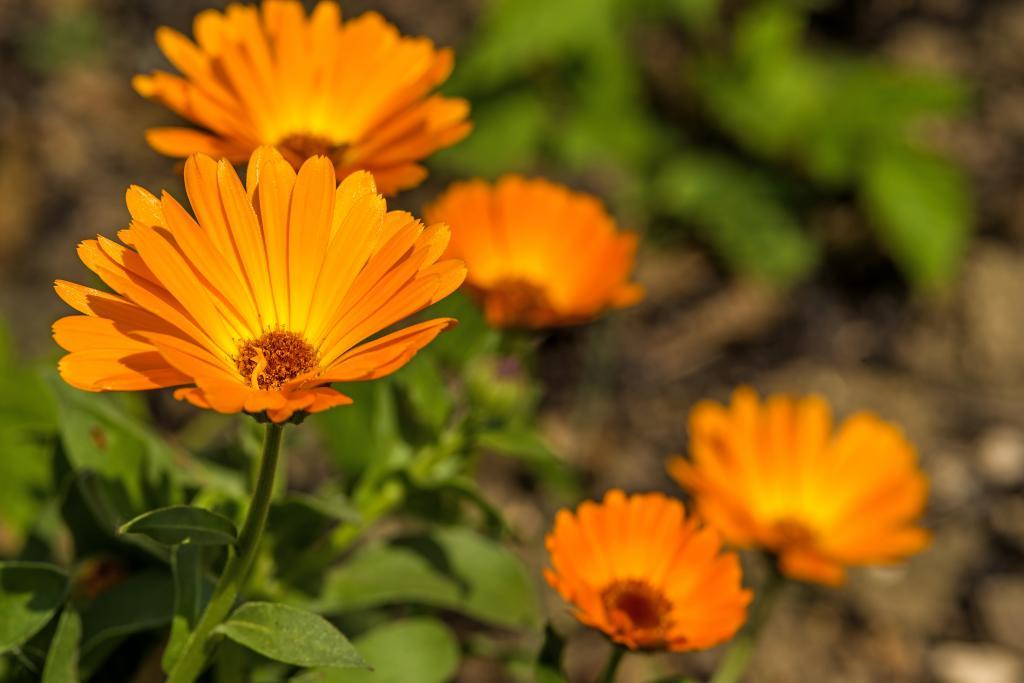 Tónovací fluid Mádara obsahuje cenné bylinné extrakty.