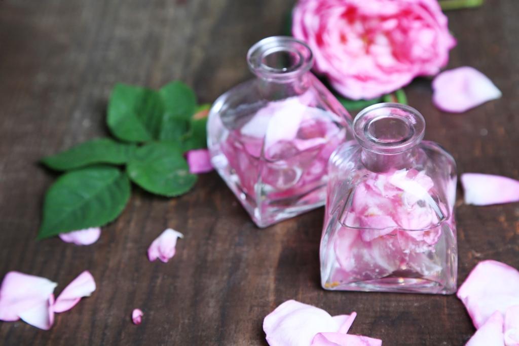 Co se sbírá ze šípkové růže