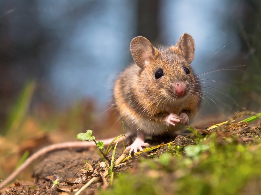 Co je dobré vědět o testování na zvířatech