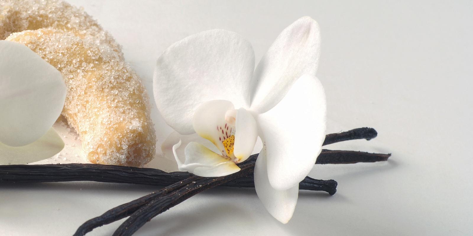Užití vanilky a několik domácích receptů