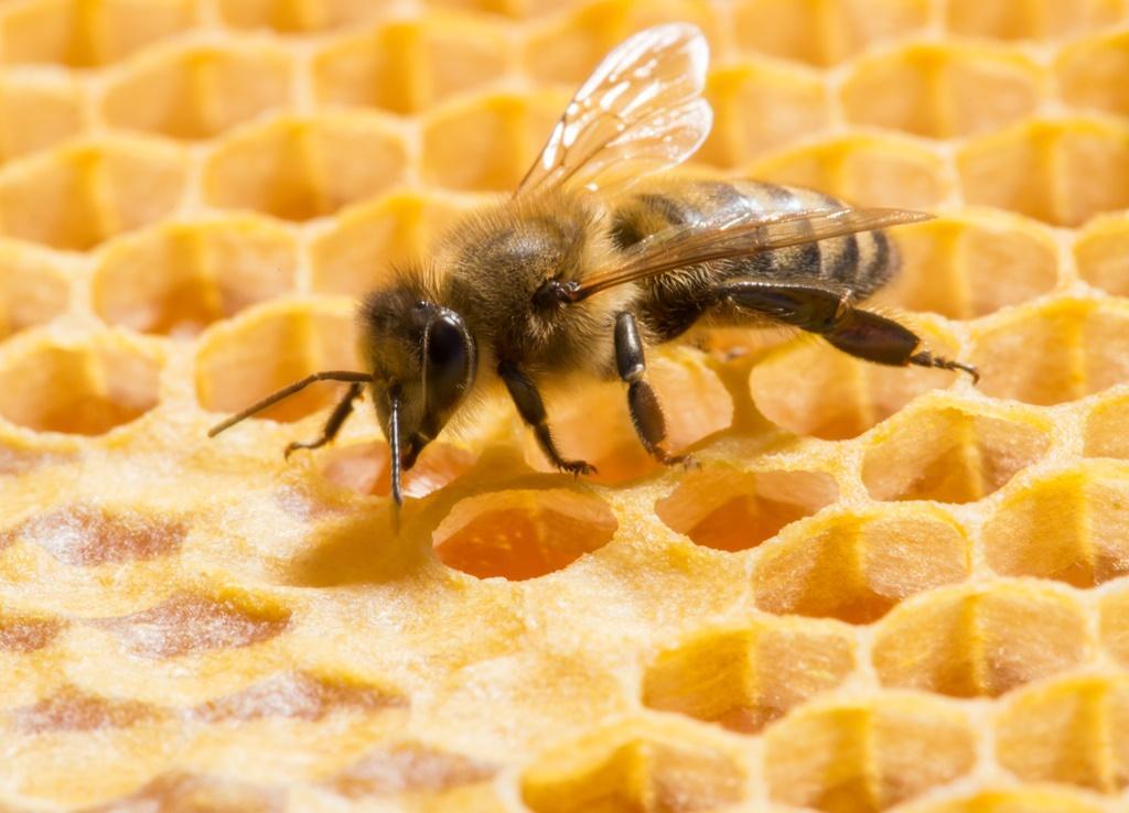 Živočišné látky v kosmetice: včelí produkty