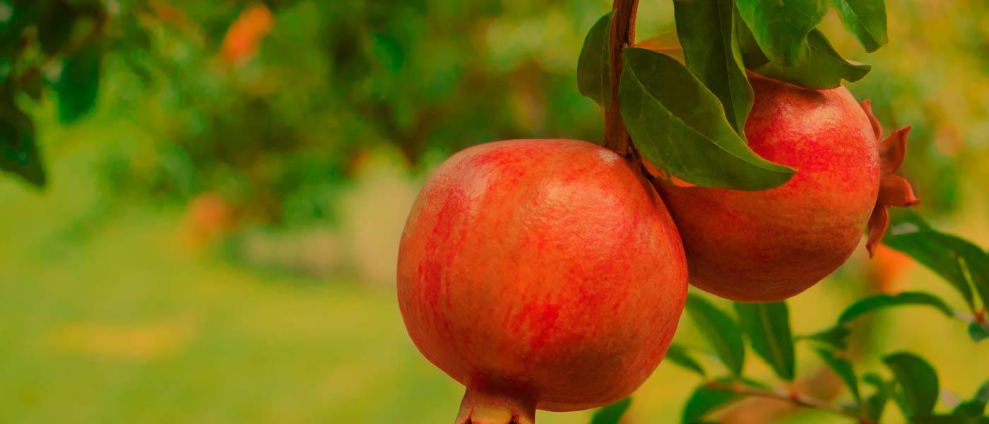 Dopřejte své pleti jarní regeneraci s granátovým jablkem od Weledy!