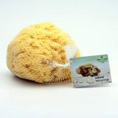 Caribbean Sun Mořská houba Wool, SWL 324 s provázkem 1 ks, 9-11 cm