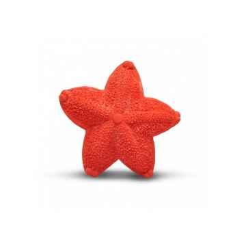 Mořská hvězdice 1 ks