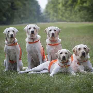 Nadační fond Mathilda Kalendář na podporu vodících psů 2019 1 ks